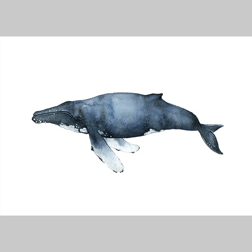Angelica_Sollander_The_Humpback_Whale