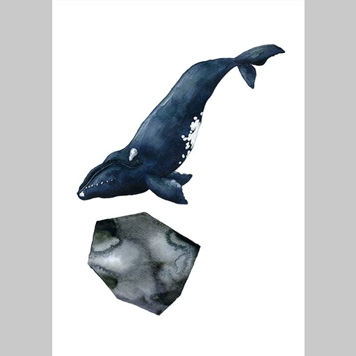 Angelica Sollander - Poster, The Right Whale